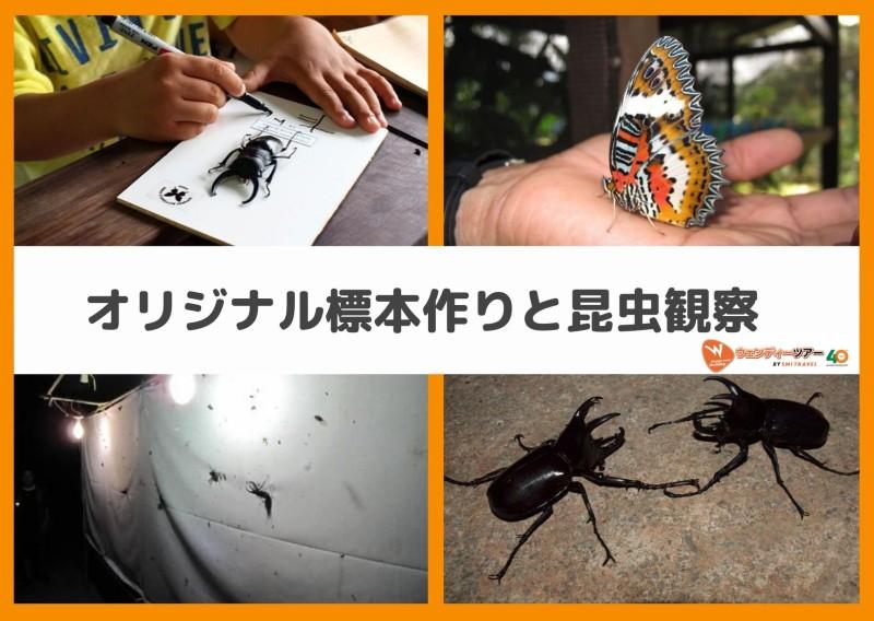 コタキナバル 昆虫標本